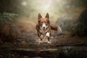 depth of field running dog