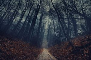 dirt road fall nature landscape mist branch leaves trees deep forest forest fallen leaves