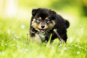 dog pet animals puppies