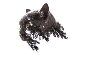 double exposure cats fir-tree