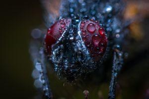 egor kamelev depth of field fly blurred bokeh