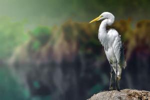 egret birds white blurred animals herons