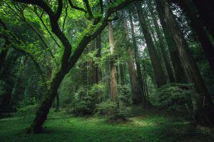 environment landscape plants trees forest