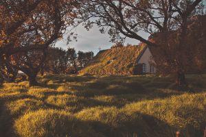 evening nature moss grass dappled sunlight trees church