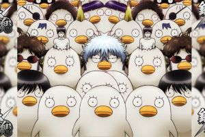 eye patch gintama anime animals