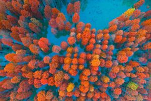fall aerial view trees