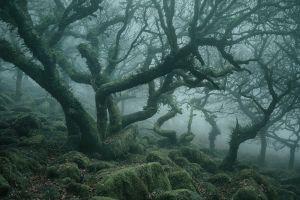 fallen leaves landscape trees moss nature forest mist england