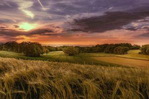 field sky sunlight landscape