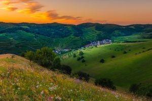 flowers nature hills landscape