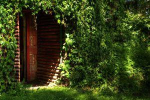 green door dappled sunlight nature plants grass