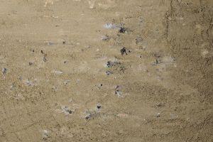 ground nature footprints