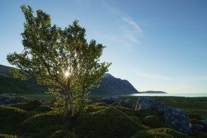 horizon trees sunlight sky shore moss birch landscape