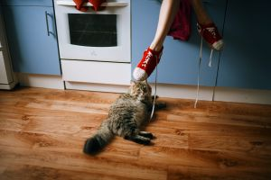 kitchen shoes marat safin legs feet cats