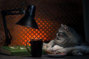 lamp animals cats