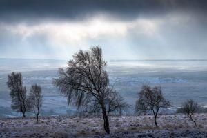 landscape cold trees winter
