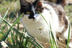 landscape landscape nature cats photography