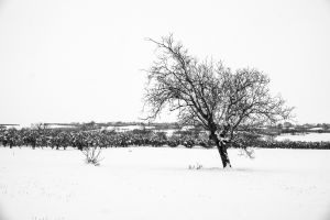 landscape minimalism winter white monochrome black