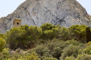 landscape mountain top plants nature