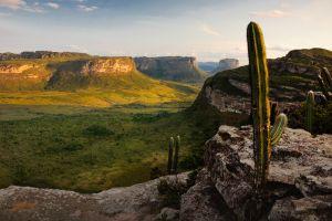 landscape nature hill cactus