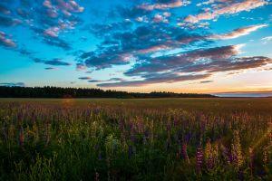 landscape nature sunrise field horizon flowers
