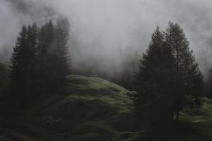 landscape pine trees mist