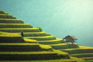 landscape rice fields nature peasants