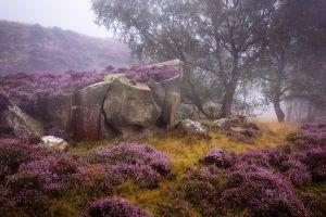 landscape rocks nature mist lavender plants