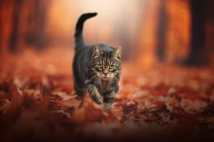 leaves animals fall blurred