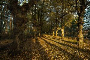 leaves trees fall