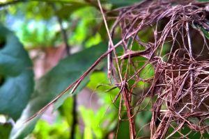 leaves trees sri lanka landscape flowers