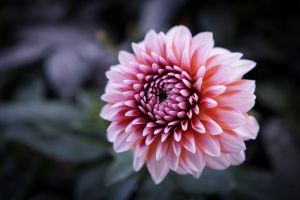 macro blurred plants flowers