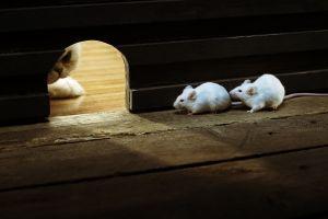 mice humor cats