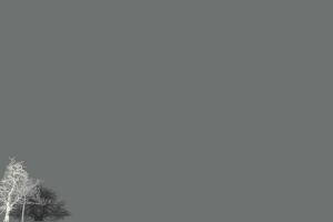 minimalism gray grey trees