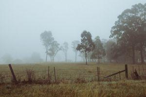 mist field landscape nature