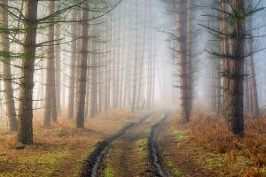 mist nature trees dirt road