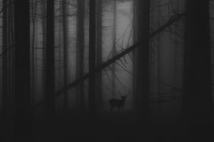 monochrome landscape deer mist forest trees