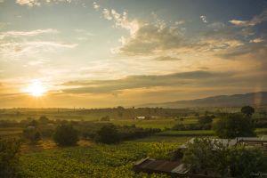 nature clouds sunset plants farm sky landscape