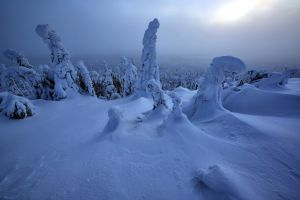 nature forest snow winter