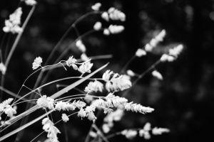 nature landscape photography monochrome plants