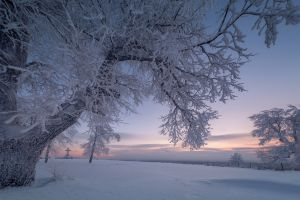 nature landscape trees winter snow