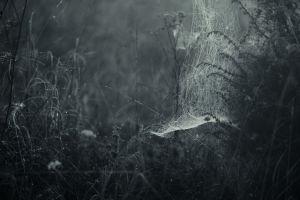 nature mist spider webs dark plants forest