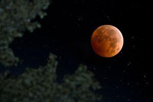 nature night clear sky moonlight super blood moon leaves trees stars landscape moon depth of field