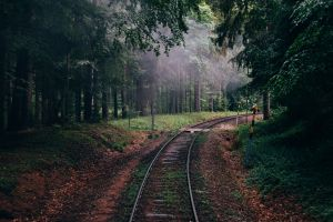 nature railway forest trees