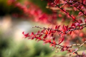 nature red outdoors macro