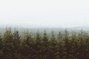 nature sky trees landscape forest