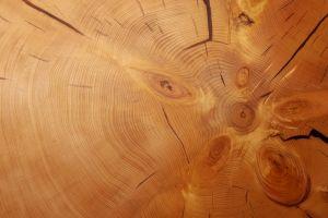 nature texture wood tree bark