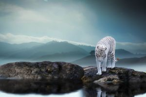 nature tiger big cats landscape photo manipulation