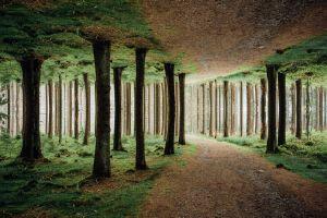 nature trees mirrored