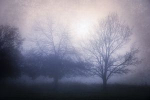 nature trees mist forest
