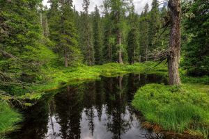 nature water green trees